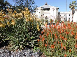 Aloe Arborescens e Aloe Vera differenze